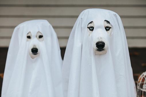 Halloween ghost「dog ghost for halloween」:スマホ壁紙(8)