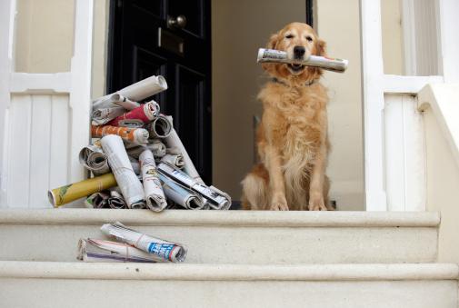 Loyalty「Golden retriever dog sitting at front door holding newspaper」:スマホ壁紙(6)