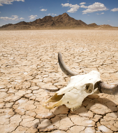 建築「Cattle Steer Skull on Dry Desert Land」:スマホ壁紙(2)