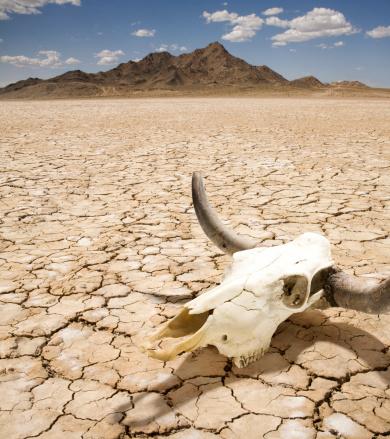 背景「Cattle Steer Skull on Dry Desert Land」:スマホ壁紙(1)