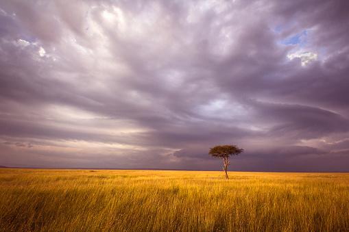 Masai Mara National Reserve「Africa landscape」:スマホ壁紙(3)