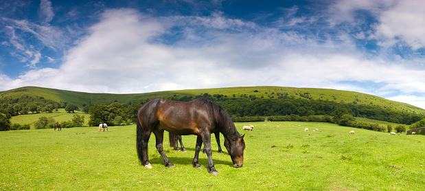 Grazing「Glossy horse in picturesque pasture」:スマホ壁紙(12)