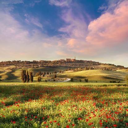Italian Cypress「Poppy field  in Tuscany at sunset」:スマホ壁紙(7)