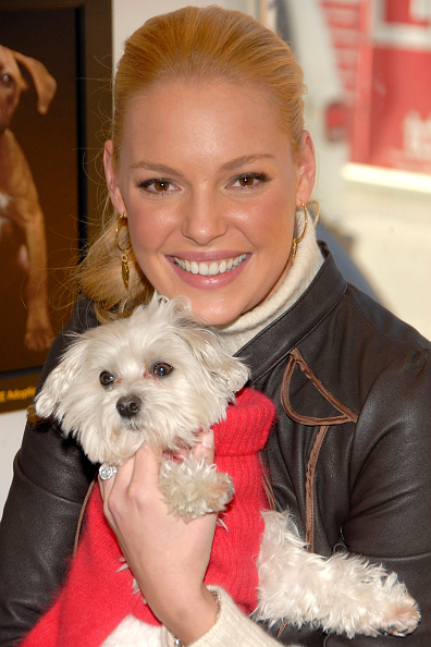 Katherine Heigl「Katherine Heigl Hosts The Third Annual Pedigree Adoption Drive」:写真・画像(10)[壁紙.com]