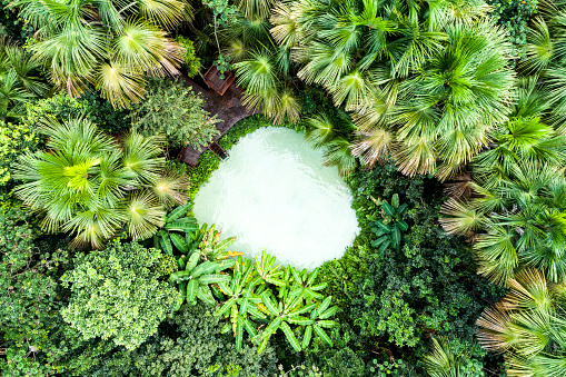 Standing Water「Top view of Fervedouro Bela Vista and forest in Jalapão」:スマホ壁紙(15)