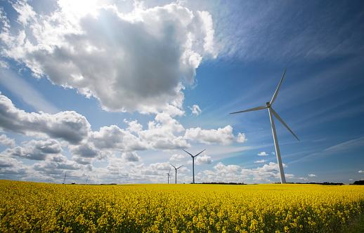 Danish Culture「Wind turbines in a field with a cloudy blue sky」:スマホ壁紙(0)