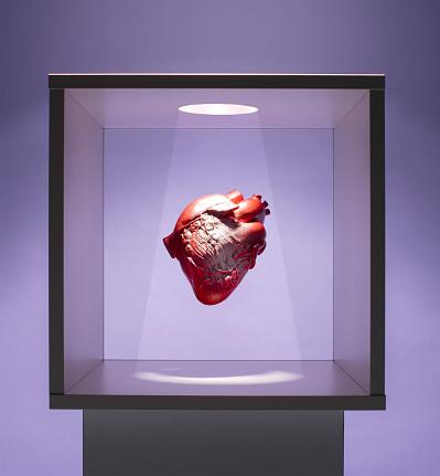 Heart「Human heart model in box」:スマホ壁紙(18)