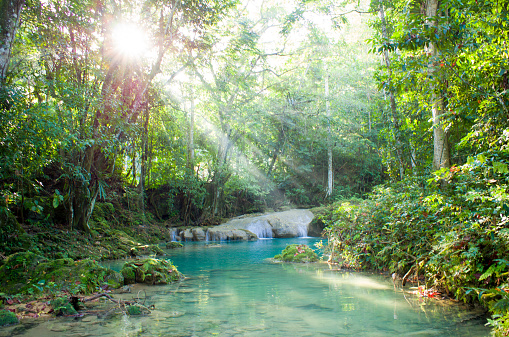 Caribbean「Morning sun in rainforest, Jamaica, Caribbean」:スマホ壁紙(1)