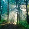 森・森林カテゴリー(壁紙.com)