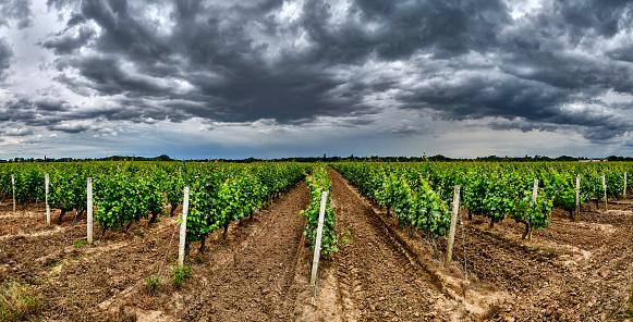 Nouvelle-Aquitaine「Medoc wine region, Nouvelle-Aquitaine, France」:スマホ壁紙(4)