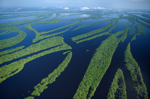 Amazon Rainforest「 Anavilhanas Archipelago, Brazil」:スマホ壁紙(12)