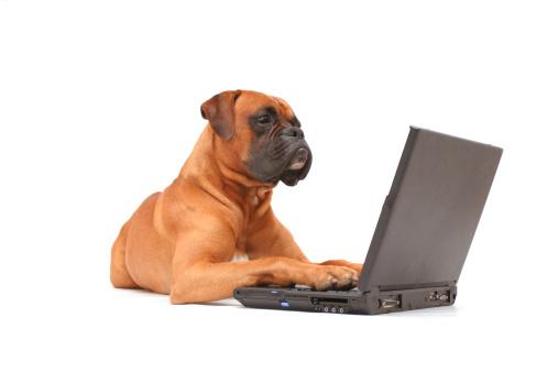 Boxer - Dog「Dog working on laptop」:スマホ壁紙(6)