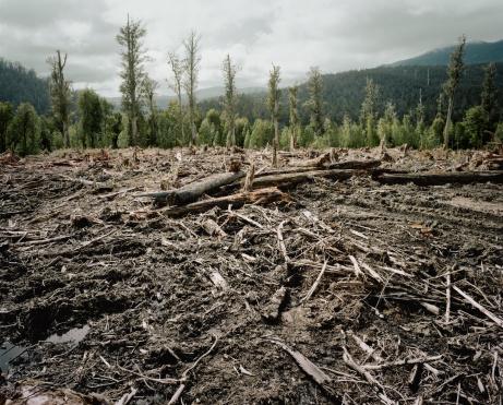 Log「Old Growth Deforestation Tasmania」:スマホ壁紙(13)