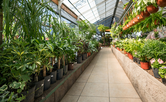 Side By Side「Pathway of a garden center and plants, bushes and flower plants on the sides of the pathway」:スマホ壁紙(10)