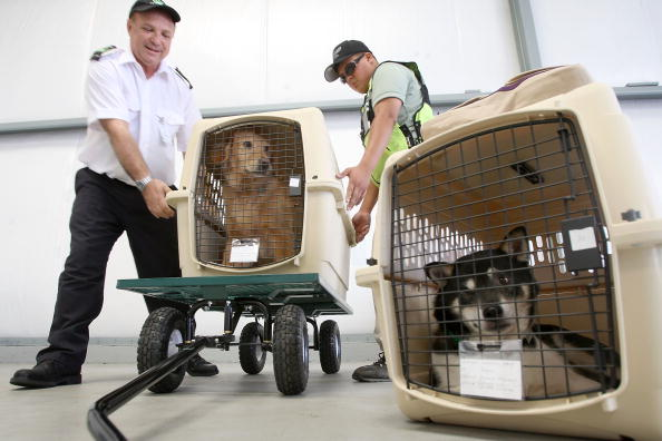 Pets「Airline For Pets Starts Flying In Select US Cities」:写真・画像(6)[壁紙.com]