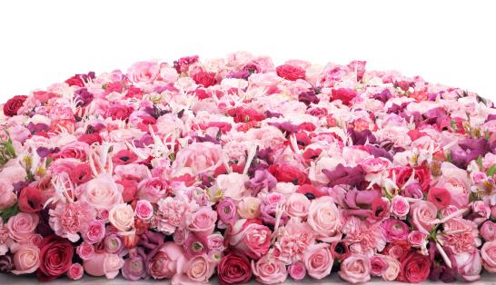 ピンク色「フラワーベッド」:スマホ壁紙(19)