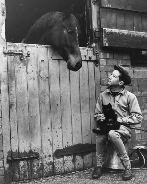 Horse「Young Lester Piggott」:写真・画像(4)[壁紙.com]