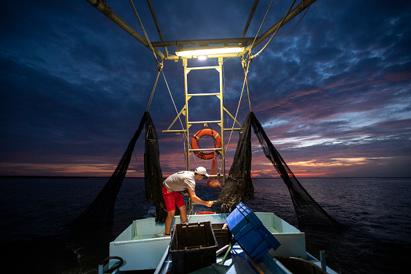 Gulf Coast States「Combination Of Rising Sea Levels And Subsiding Land Endanger Louisiana Coast」:写真・画像(9)[壁紙.com]
