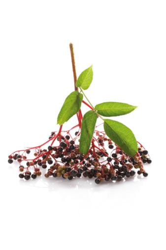 Branch - Plant Part「Black elder (Sambucus nigra)」:スマホ壁紙(9)