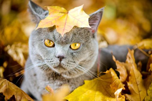 かえでの葉「かわいい猫 oudoors」:スマホ壁紙(3)