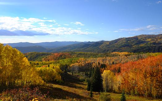 Aspen Tree「fall colors in Colorado mountains」:スマホ壁紙(10)