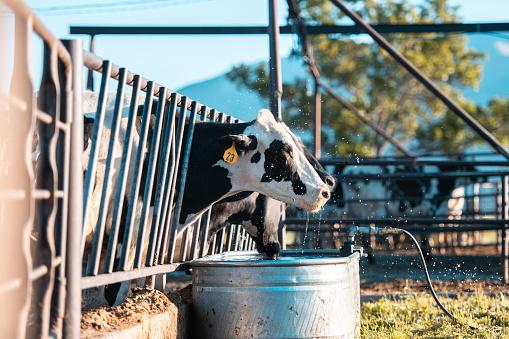 Baby animal「Cows in a pen」:スマホ壁紙(11)
