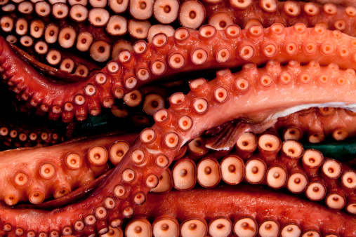 バイパス「Octopus for sale at Tsukiji Market」:スマホ壁紙(19)