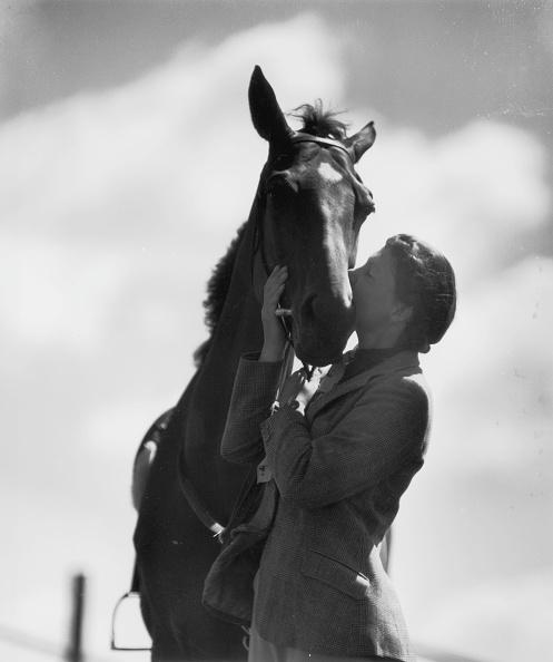 Horse「Pony Pal」:写真・画像(8)[壁紙.com]