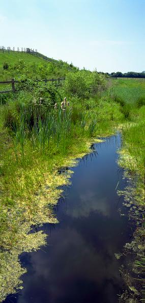 Grass「Nature wildlife reserve, Gloucestershire, England, UK」:写真・画像(11)[壁紙.com]