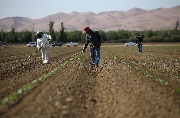 田畑「California's Central Valley Heavily Impacted By Severe Drought」:写真・画像(0)[壁紙.com]