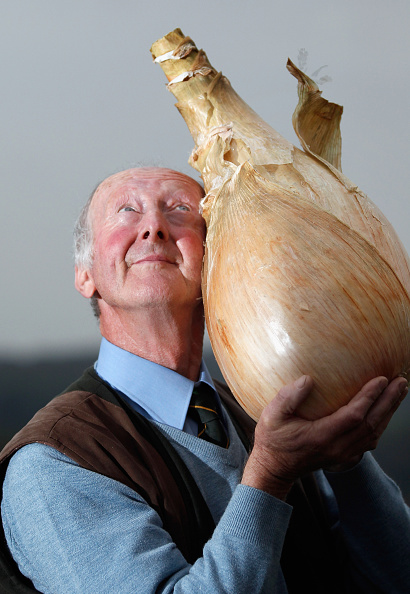 Onion「Visitors Enjoy The Autumn Flowers At The Harrogate Flower Show」:写真・画像(7)[壁紙.com]