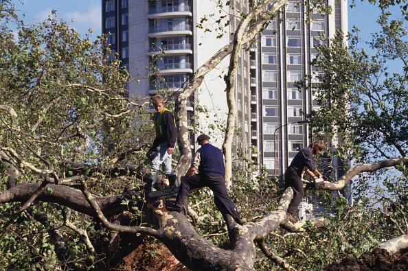 Tree「Great Storm Of 1987」:写真・画像(1)[壁紙.com]