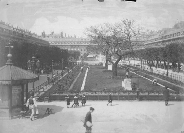 Tree「Palais-Royal Gardens」:写真・画像(6)[壁紙.com]