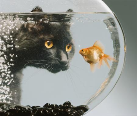 black cat「Black cat looking at goldfish in bowl」:スマホ壁紙(7)