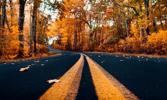 かえでの葉「ニューハンプシャー州の秋の道」:スマホ壁紙(6)