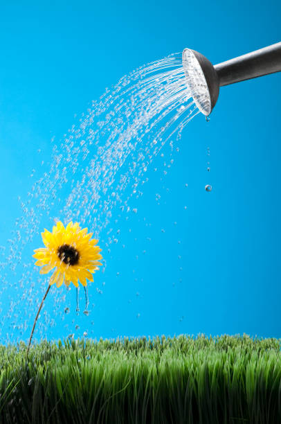 Watering A Flower:スマホ壁紙(壁紙.com)
