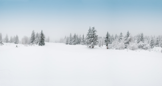 Pine Woodland「Winter Landscape with Snow and Trees」:スマホ壁紙(17)