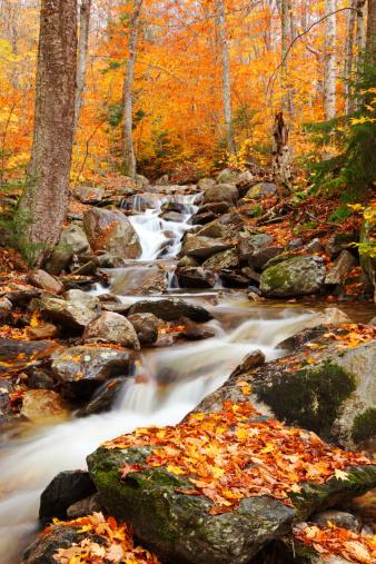 グリーン山脈「Green Mountains, Vermont」:スマホ壁紙(2)