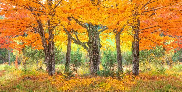 グリーン山脈「秋の砂糖カエデの木と緑の山、VT」:スマホ壁紙(18)