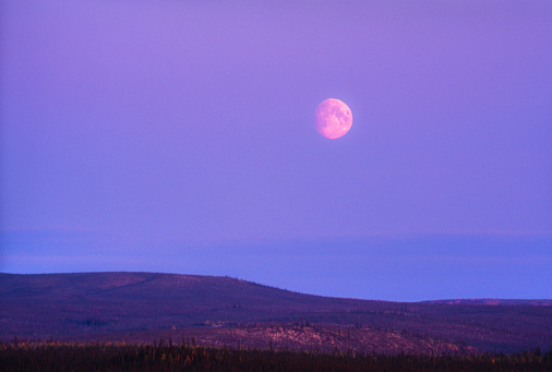 Moon「Big Moon over the Boreal Forest of the Yukon Territory at Dusk - Canada」:スマホ壁紙(3)