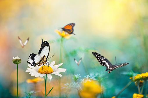Wildflower「Butterfly Meadow」:スマホ壁紙(16)