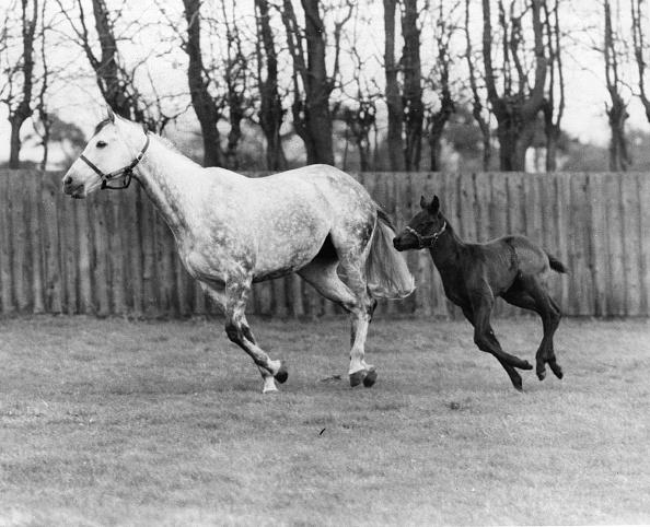 Racehorse「Racehorse And Colt」:写真・画像(3)[壁紙.com]