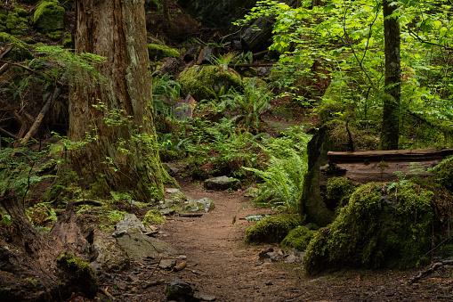 Log「Tranquil Forest Footpath Scene」:スマホ壁紙(16)