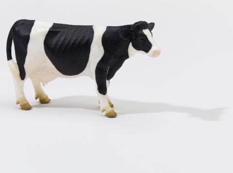Females「Cow on White」:スマホ壁紙(1)