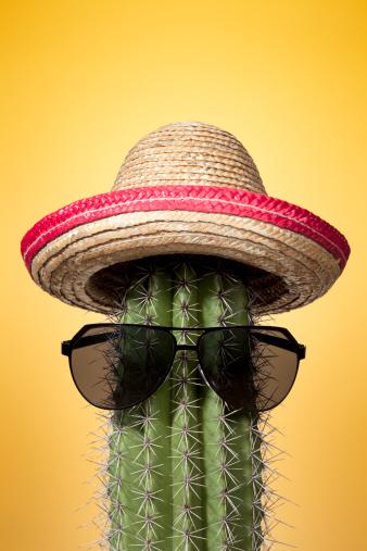 Mexico「Mexico cactus. Summer Humor Sombrero Mexican Culture Holiday Heat」:スマホ壁紙(16)