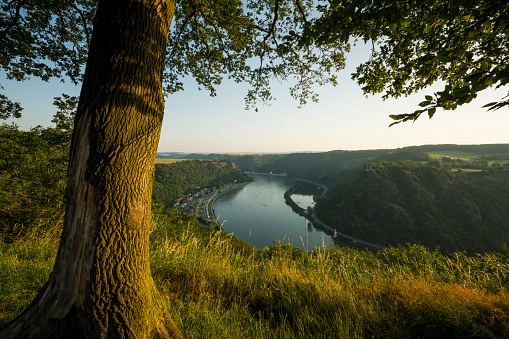 Tree Trunk「Rhine river and Lorelei rock」:スマホ壁紙(6)