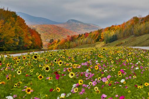 Wildflower「Colorful flowers」:スマホ壁紙(1)