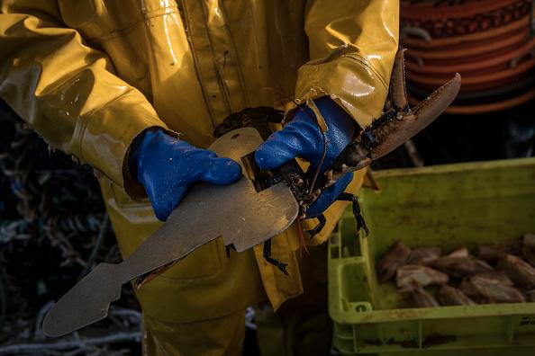 Fisherman「Lobster Fishing In Granville Bay As Brexit Deal Looms Overhead」:写真・画像(12)[壁紙.com]