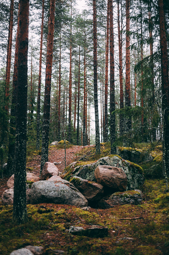 Boreal Forest「Raining morning in Finland in the silence in the forest that gives peace and quiet」:スマホ壁紙(19)