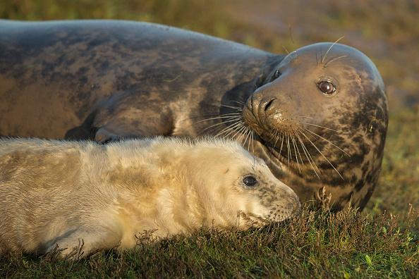 Grass「Seal Pup Season Continues At Donna Nook Reserve」:写真・画像(11)[壁紙.com]